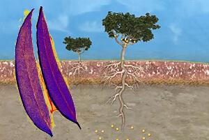 Gold wächst auf Bäumen