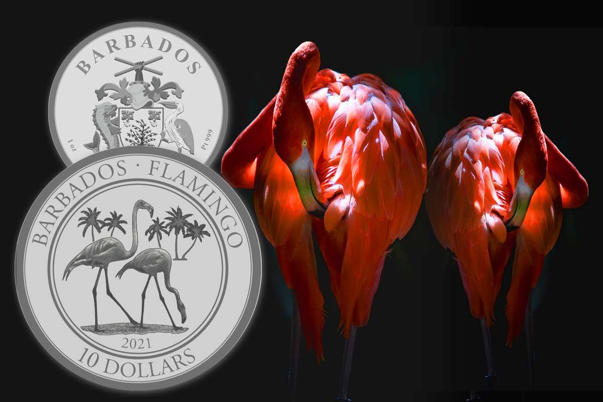 Barbados Flamingo Platin 2021 Neues Motiv jetzt vergleichen!