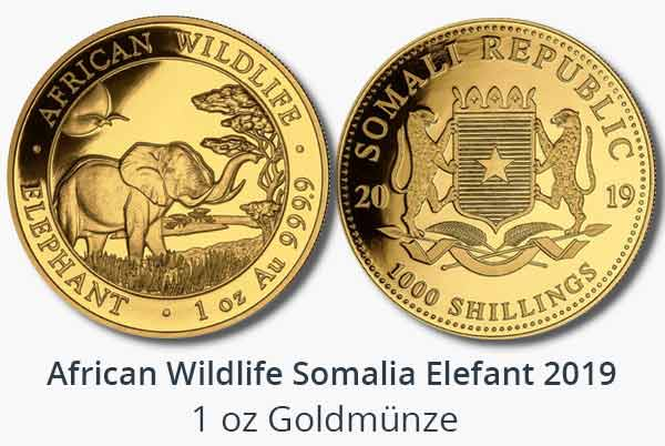 African Wildlife 2019 Somalia Elephant Gold