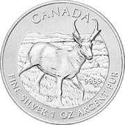 Thumb Wildlife Kanada Silbermünze